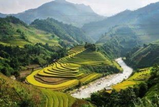 La chasse au Web « toxique » au Vietnam